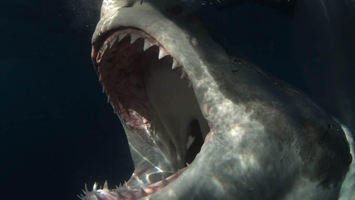 Shark Week 2019 Shark Attack Proposition Betting Odds